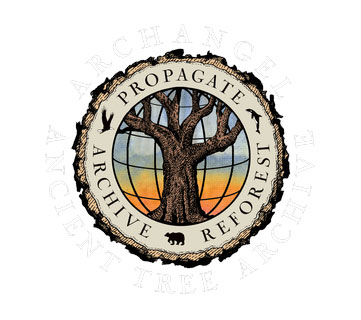 Archangel Ancient Tree Archive